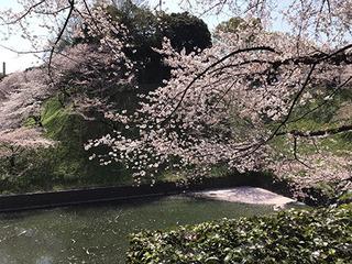 桜�A_カラーバランス修正.jpg
